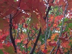 Fall in Pure Michigan
