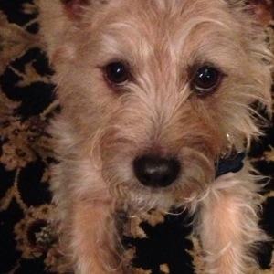 my puppy Cooper